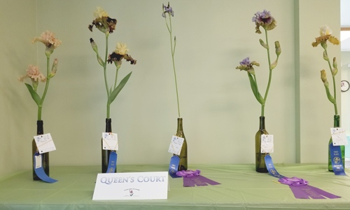Garden State Iris Society For Nj Iris Growers Iris Gardeners And
